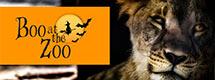 Safari Niagara's Boo at the Zoo Welcomes Vendors